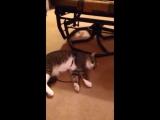 Хитрый кот притворился мертвым чтобы не идти с хозяином на прогулку