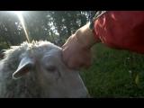 2013год. Пасём скот.
