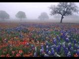 Бесподобная мелодия! В тумане. Music Sergey Chekalin.