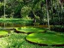 Самые опасные животные Амазонии National Geographic