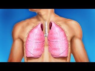 Органы дыхания, дыхательная система организма человека. Процесс дыхания