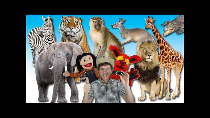 What Do You See Song | Wild Animals | Learn English Kids