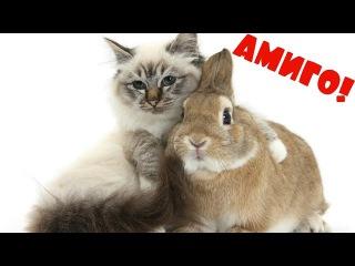 КРОЛИКИ И КОШКИ ЛУЧШИЕ ДРУЗЬЯ! Приколы с животными кролики