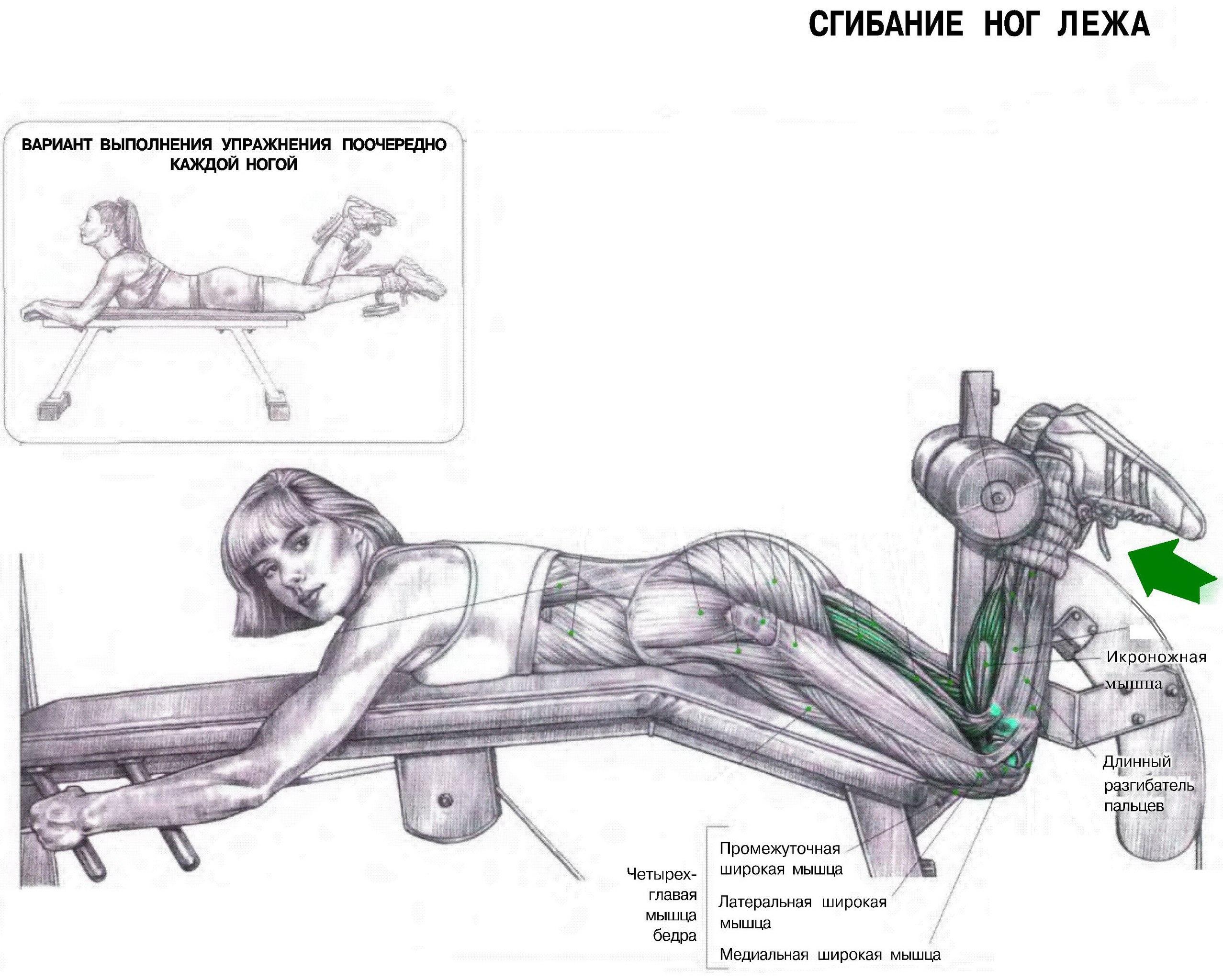 Упражнения для задней поверхность бедра в домашних условиях