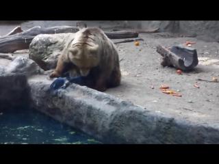 В зоопарке Будапешта медведь спас тонущую ворону!