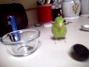 Cute Parrotlet Playing and making noise
