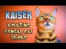 Kaiser the Amazing Bengal Amazing Cat Tricks