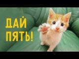Кот всегда поддержит!