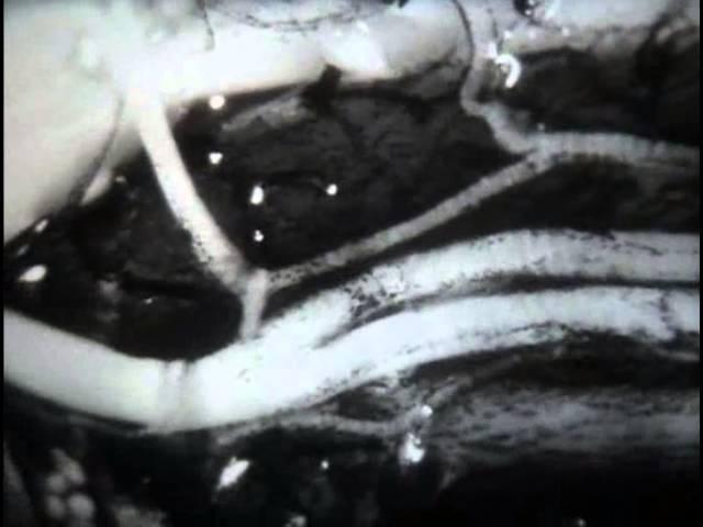 НаучФильм. Строение и свойства нервной ткани