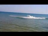 Дельфин на пляже в ст. Благовещенская, Анапа 13.06.2015г