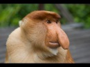 Самые странные в мире животные На суше