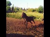 Сыкун)))Русский рысак ,Свияг -Облачная