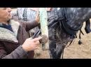как правильно запрячь лошадь в русскую дуговую упряжь