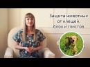 Лечение кошек и собак от клещей, блох и глистов