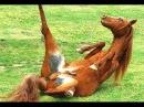 Топ 10 Смешные Лошади! СБОРНИК 2016 [NEW]