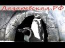 Пингвинарий Океанариума Морская Звезда в Лазаревском - Отдых, Развлечения