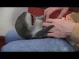 Прикольная игрушка детеныш акулы!