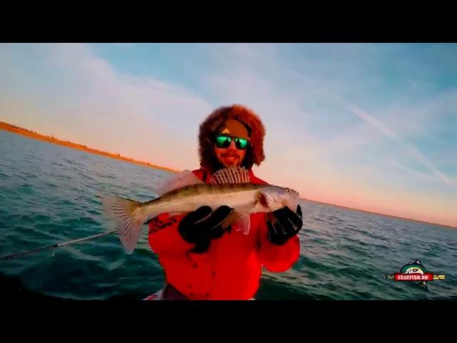 EsseFish. Судак 6250