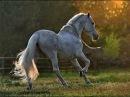 БГ+Аквариум - Лошадь Белая (клип) HD