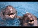 Дельфины приносят ПОЗИТИВ от вечной улыбки, дружбы, верности.