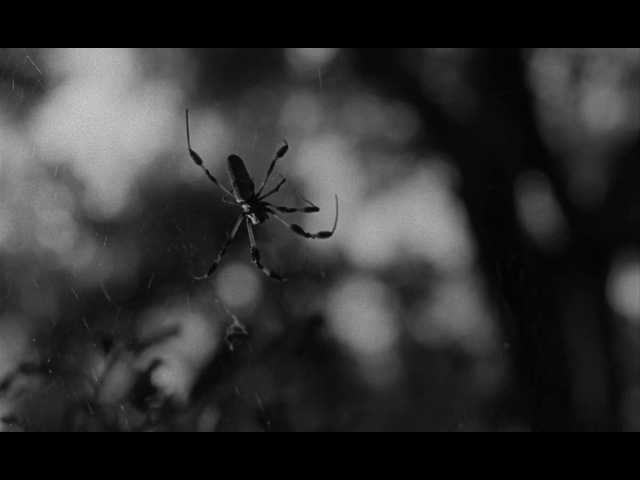 Spider Baby 1967. Horror, Comedy. 720p