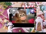 Видео-открытка. Поздравление с Новым Годом обезьяны 2016.