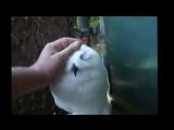 Самые милые и смешные птицы совы Подборка Топ 7