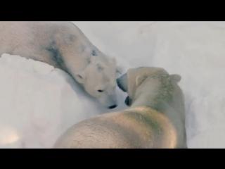 Белые ми-ми-мишки в Сан-Диего радуются снегу