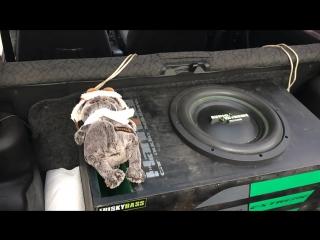 Басика колбасит, прикол (Alphard, Hannibal, Audio Extreme GR-12F, автозвук, басы.)