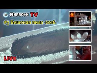 LIVE #3 | Бешеная пила - 2016 | Фестиваль Снеголёд в Кировске