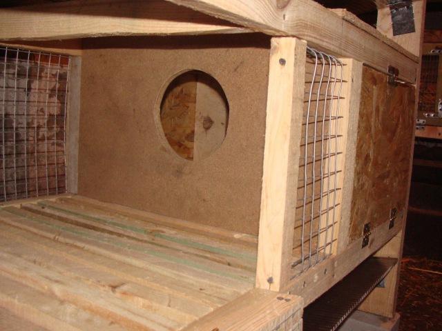Кролики, маточник своими руками, постройка