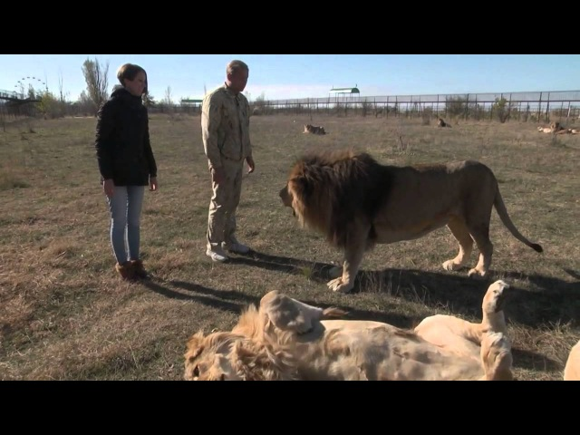 Парк львов Тайган Прогулка в сафари среди львов