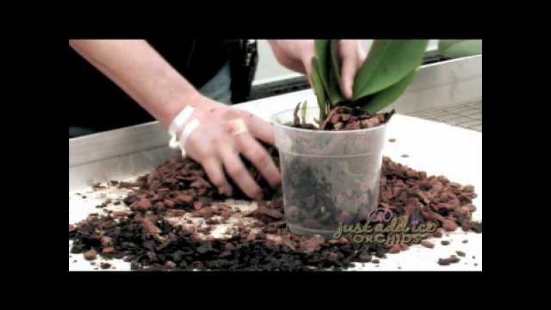 Re-Potting your Just Add Ice Orchid