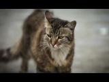 Кошки  Джуманджи. Животные в мегаполисе