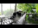 говорящая птица Тайланд