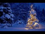 РЯДОВОЙ ДАРИН - ЦЕЛУЙТЕ ЛЮБИМЫХ (Новогодняя)