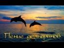 Пение Дельфинов под Медитативную музыку...
