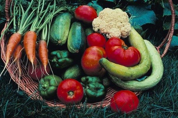 Органическое земледелие K6pZuUiX0Lw