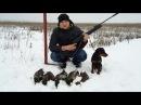 Рай для охотника, охота на утку с пневматики с ягдтерьером 10 мес. зима 2016 год, смотреть до конца!