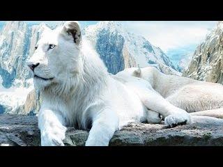 Загадка Природы! Белый лев! Возвращение белого льва - документальный фильм