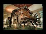 Настоящие скелеты динозавров, мамонтов и доисторических ящеров
