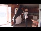 Самая большая собака в мире живет в штате Невада США