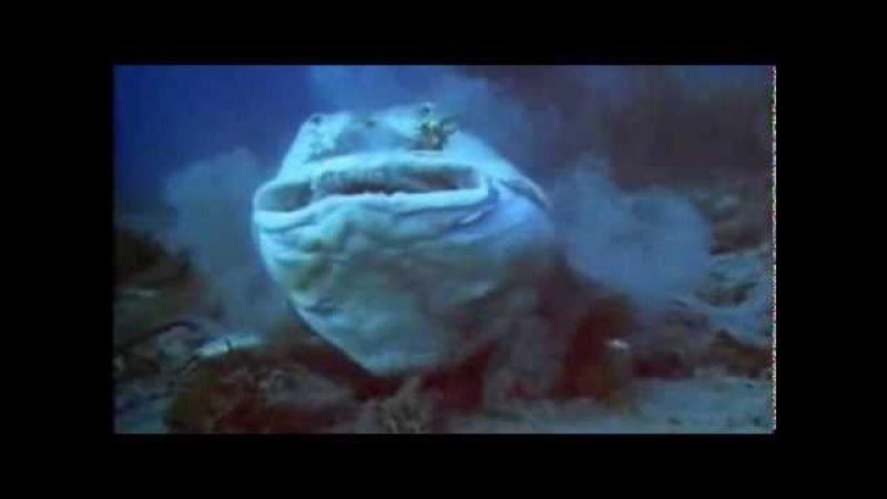 Твои веселые друзья зверята Акула молот Хула