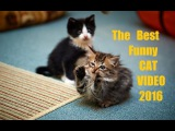 Funny Cat & Cute Kittens Fail Animals Videos Best Funny Kitty Cat Video № 27 | Morsomme Katter № 27