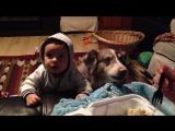 Этот неловкий момент, когда твоя собака научилась говорить