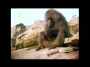 «Дикий секс: Либидо» (Документальный, животные, 2005)