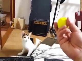 Кот быстрого реагирования