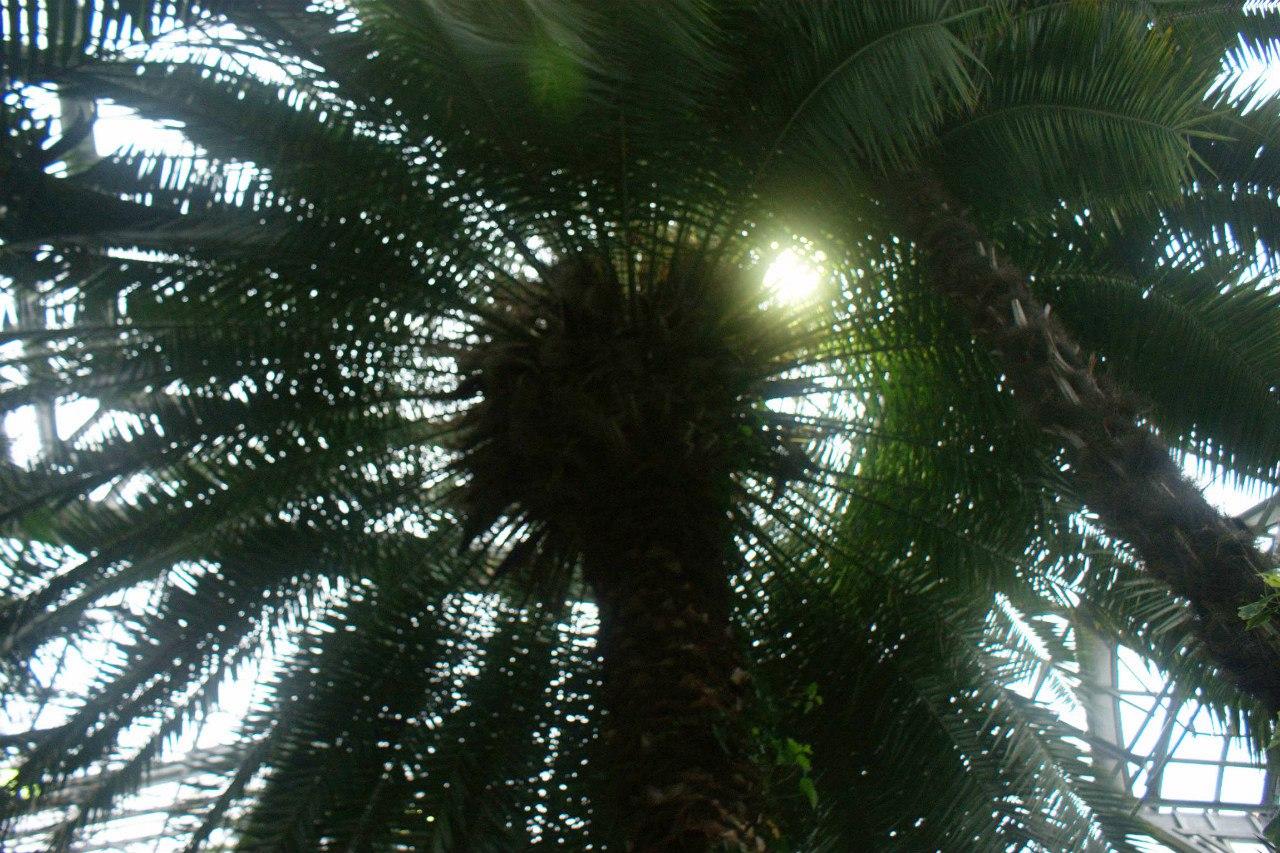 Узенькая тропинка по которой савушкин 12 фотография