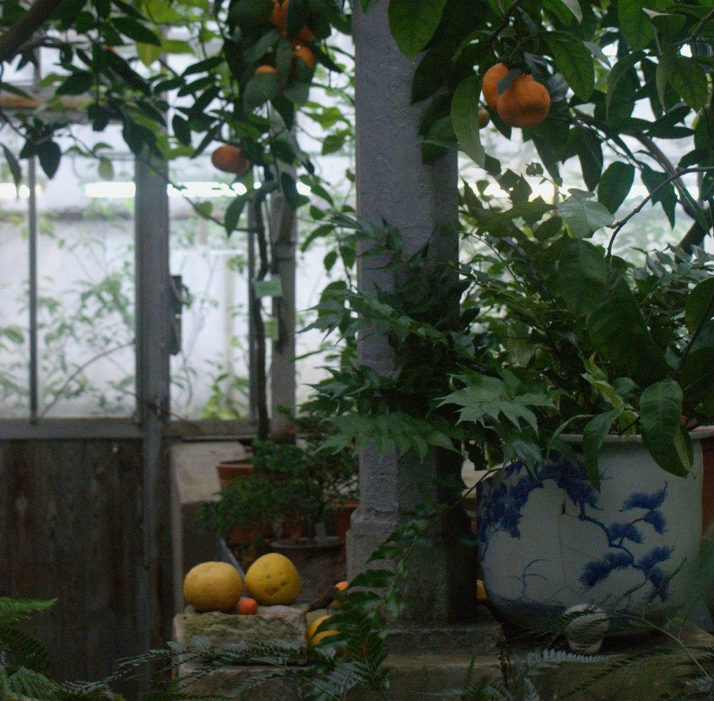 Узенькая тропинка по которой савушкин 20 фотография