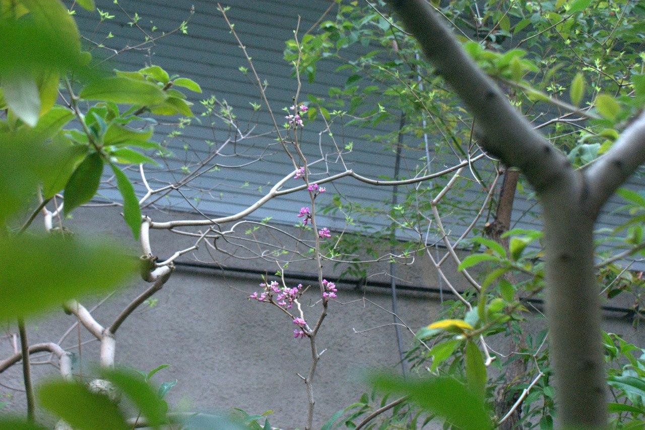 Узенькая тропинка по которой савушкин 6 фотография